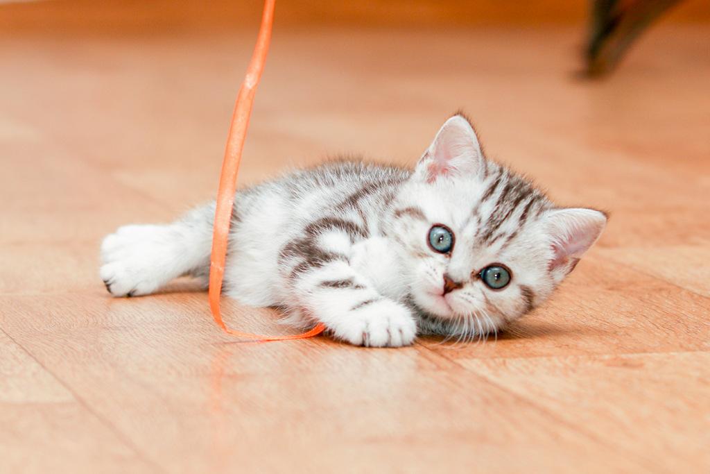 Кошка играет с ленточкой